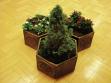 Potted Plants improve the Šternberk gallery.