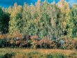 Elly Clarke. The Trans-Siberian Photo Project. 2006 Birch Forest (First Three Days) Hand printed colour photo, 30x40